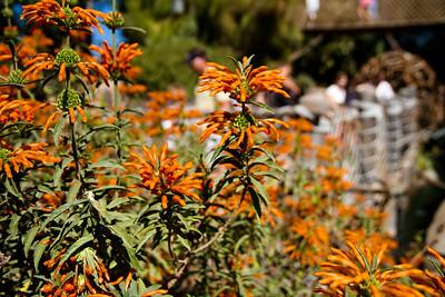 Flowers on Tom Sawyer's Island