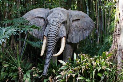 Elephant trained in speech