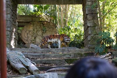Tigers can jump 30 feet...