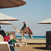 Camel on the beach. melia Pharoah. Hurghada, Egypt.