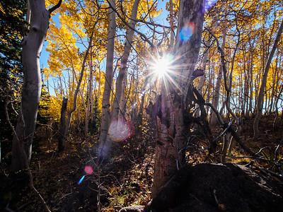 Grove on Boulder Mountain