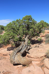 20180715-042 - Canyonlands NP - Grand View Point Overlook