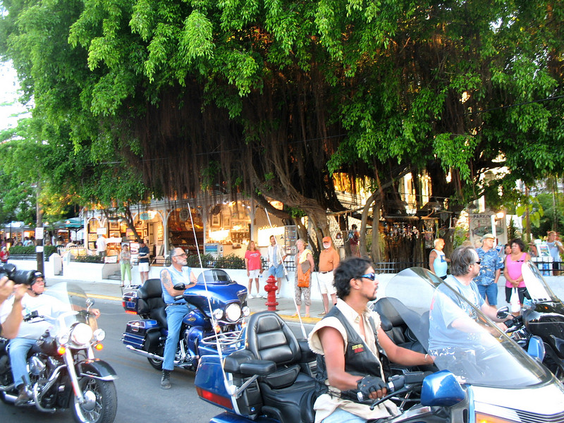 Key West hanging tree & bikers.