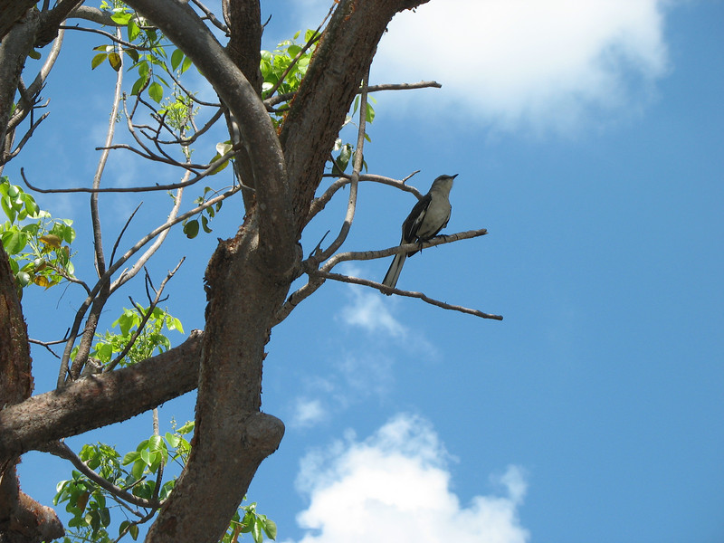 Blue skies, blue bird.