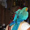 A bird on 'me shoulder'.