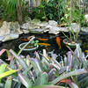 Koi pond at the Pier House.
