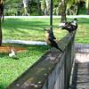 Bird and ducks.