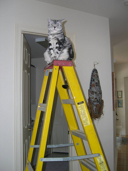 Dad's cat Roxie on the ladder.