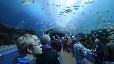 2016 Atlanta Aquarium
