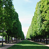 Nice row of trees in one of the many parks around the city.