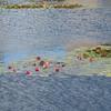 Water Lillies, Colleville-sur-Mer.