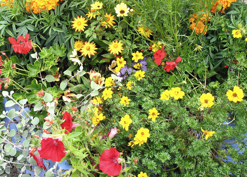 Honfleur flowers.