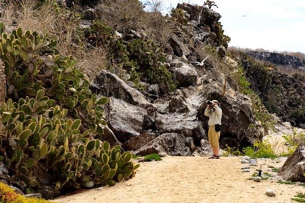 Genovesa Island Darwin Bay Beach