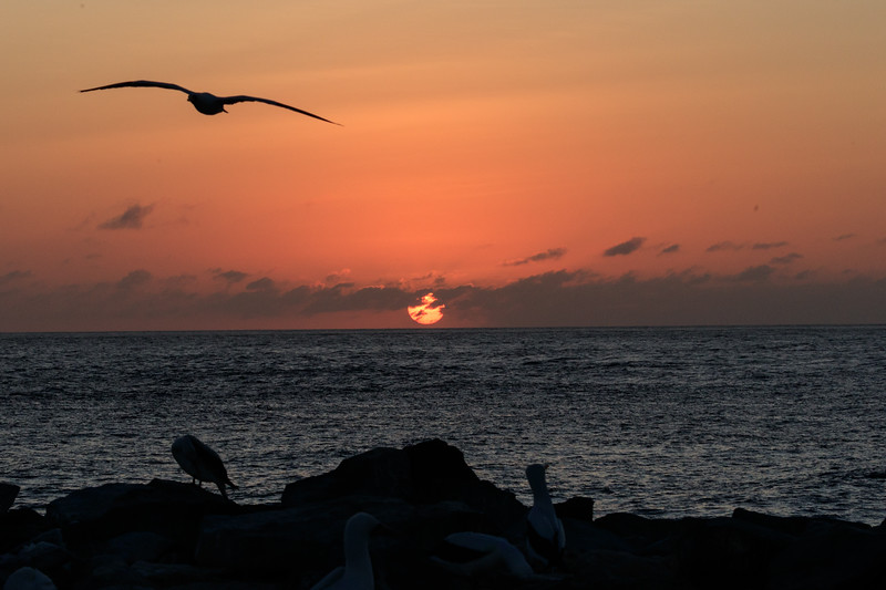 Espanola Island, visiting Punta Suarez  and walking the rocky 1 3/4 mile trail