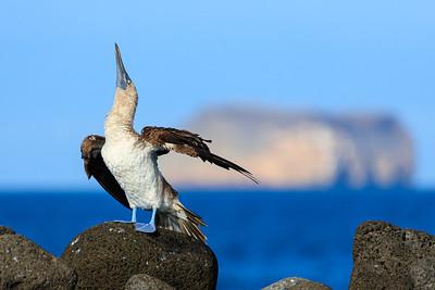 2016 Galápagos December
