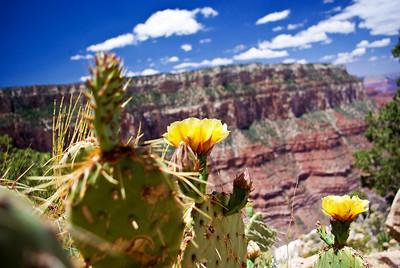 pretty cactus flowers