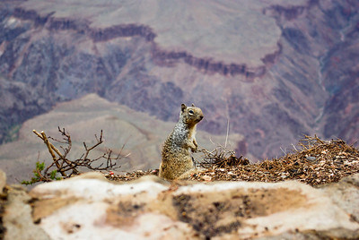 Squirrels everywhere at the canyon