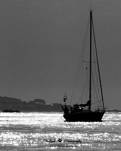 Jersey Harbor