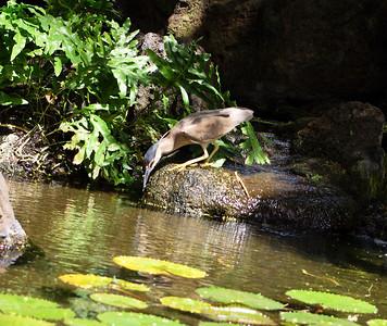 Hotel water garden