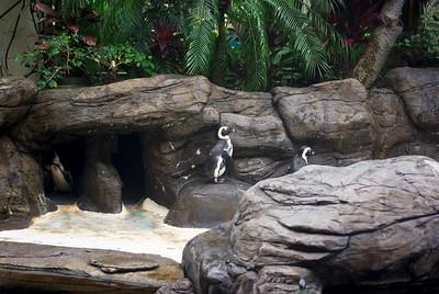 Penguins at hotel