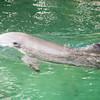 Dolphins at the Kahala. Pretty friendly fellas.