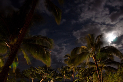Palms At Night (12 of 17)