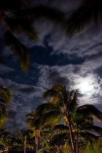 Palms At Night (6 of 17)