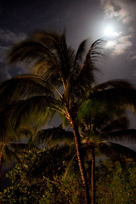 Palms At Night (2 of 17)