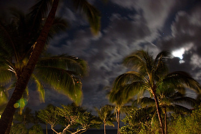 Palms At Night (10 of 17)