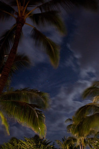 Palms At Night (11 of 17)