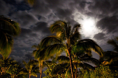 Palms At Night (8 of 17)