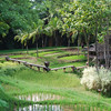 A walkway down through the rice fields at the Four Seasons