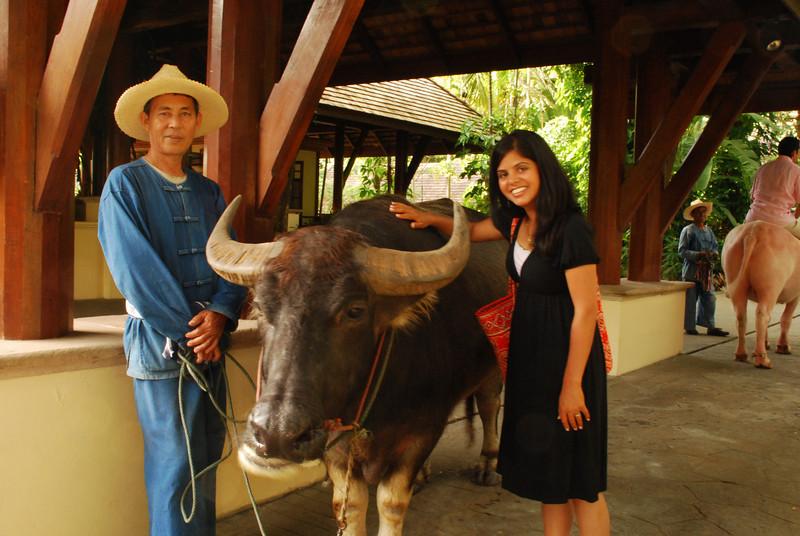 Ami finally got to say hi to the water buffalo!