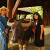 Ami finally got to say hi to the water buffalo!