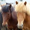 858 Horses