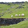 838 Sheep