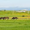 852 Horses