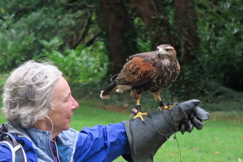 Sandy with her new best friend, a Harris Hawk.