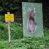 """10-17-12 """"Gatti Al Sole"""" - Cats in the Sun on Monte Isola, Italy."""