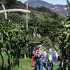 10-16-12 More vineyards. Here's Steve, Kara in red pants, Keith & Scott
