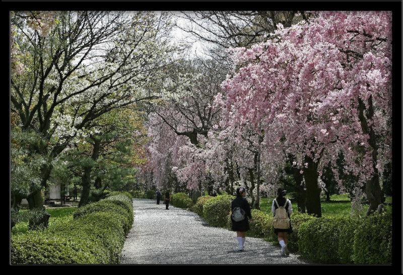 Kyoto Nijo Castle-1B