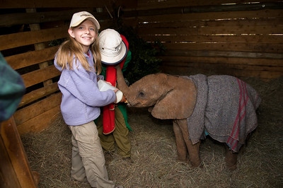 Sara helping to feed one of the orphan baby elephants