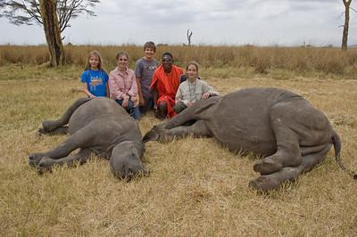 Orphan Rhinos