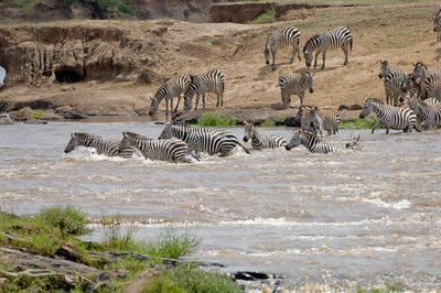 Common Zebra crossing the Masai River