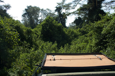 "View from the top of the Land Cruiser as we were going VERY ""off road"" trying to find some Black and White Colobus Monkeys"