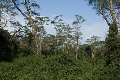 Forest where we went looking for Black and White Colobus Monkeys...and got stuck 3 separate times!