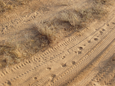 Following Leopard tracks