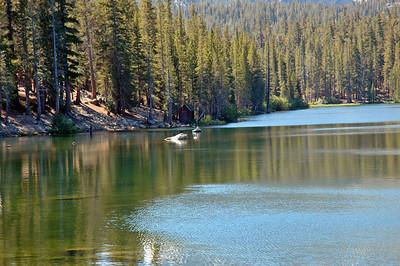 Float tube fishing below Lake Mary in Mammoths Lakes, CA.