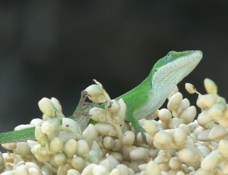Fri 06-09-01 Lizard
