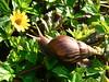 Maui-Monday - Snail